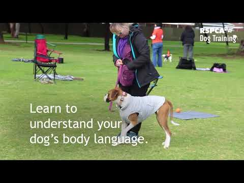 Sign up for RSPCA's free dog training course - YouTube