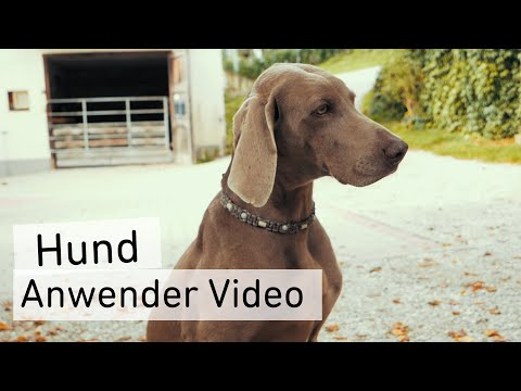 User Video Dog | CharLine Feed Charcoal