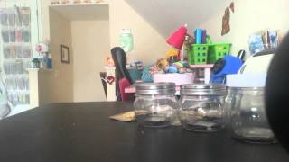 Jars,jar jewelry  planners journals  and paper