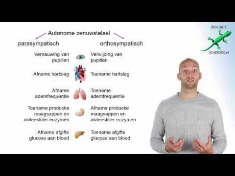 zenuwstelsel - onderdelen zenuwstelsel