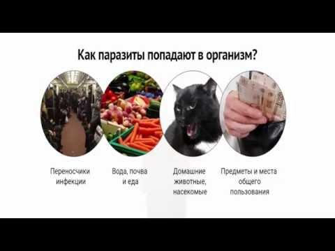 Паразиты в организме человека симптомы острица
