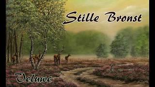 Stille Bronst, mistig Leuvenumse bos movie