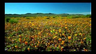 John Martyn  One World - (Beauty Without, Within) (Fan Video)