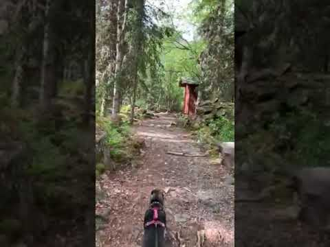 Video Of Eagle River Nature Center (public use cabins/yurts), AK