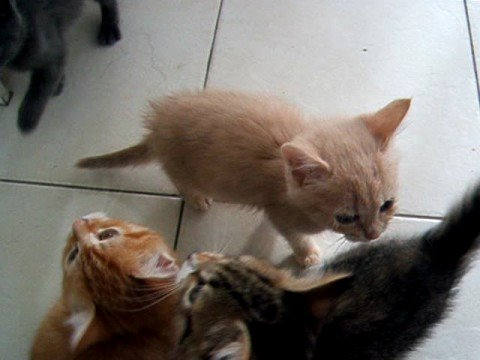 Puppies and Flowers :    Noisy kittens waiting for dinner!