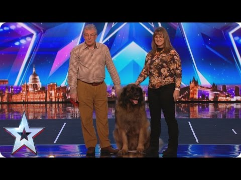 See Huge Dog Hagrid's Sausage Slinging World Record Attempt | Britain's Got More Talent 2017