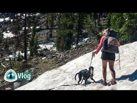 I Probably Wouldn't Take a Dog Thru-hiking