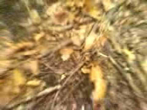 Il miglior unguento per trattamento un fungo tra le dita