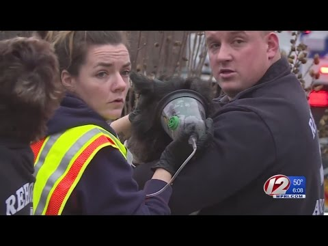 Dogs Rescued from Fire Treated with Specialized Oxygen Masks