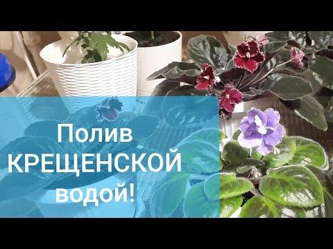 Можно ли поливать цветы Крещенской водой?