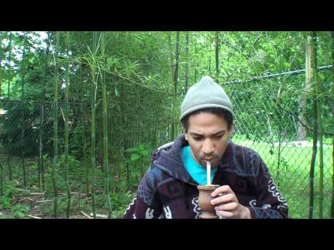 Video Fresh Look on Yerba Mate's Social and Health Benefits