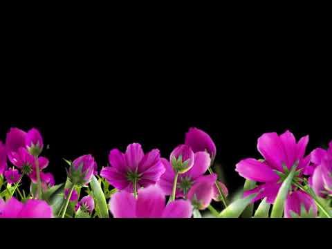 Футаж цветы на чёрном фоне