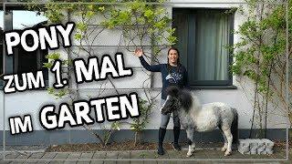 Mein Pony zum 1. Mal im Garten meiner Eltern :D