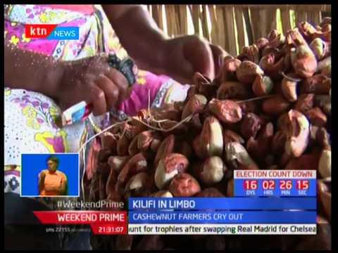 Kilifi in Limbo : Cashewnut industry collapsing