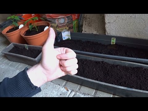 Kräuter anpflanzen und Paprika umpflanzen mit ShaneTSGTV