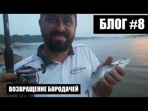 Рыбалка не задалась, Волга, чехонь, жара, Леха вернулся :блог #8