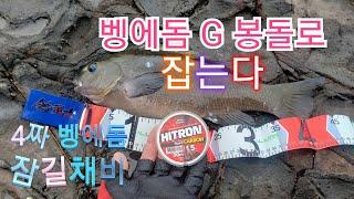 Opaleye rock fishing 92