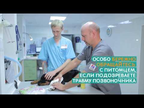 Народные средства лечения коленного сустава мениск