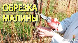 Смотреть онлайн Как правильно обрезать ремонтантную малину весной