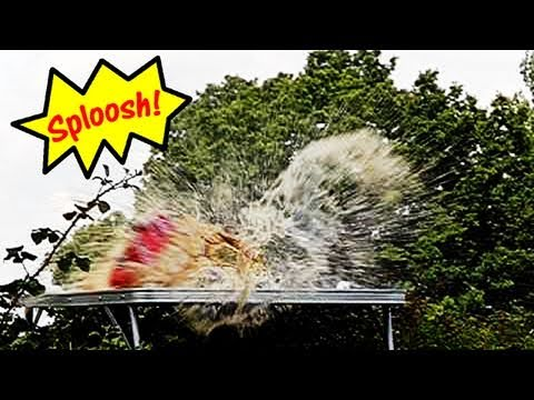 Fieldsports Britain – Exploding Coke cans, foxes, airguns and big cats