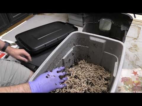 Moles at ang kanilang mga parasito