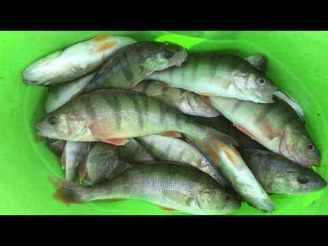 Pesca invernale di video su una picca