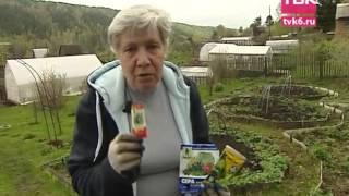 Обработка клубники от вредителей весной видео