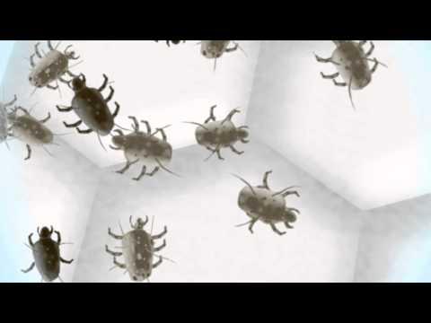 Parassiti in polvere di casa