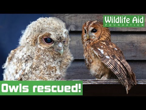 CUTE baby owls released back into the WILD (with SLOWMO)