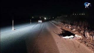 На Сырковском шоссе под колесами легковушки на обочине погиб пешеход