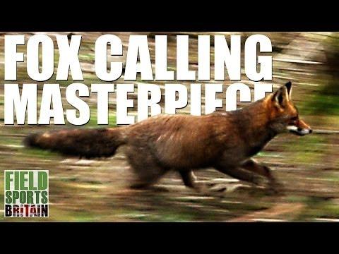 Fieldsports Britain – Fox-calling masterpiece