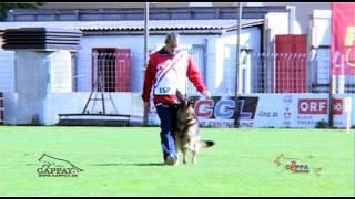 preview picture of video 'WUSV 2012 Steyr, Obediencia, Dani Ruano, Real CEPPA'