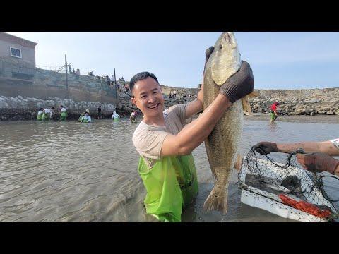 五万元包下五十亩大鱼塘,迎来众多赶海达人挑战,最多的抓八十斤