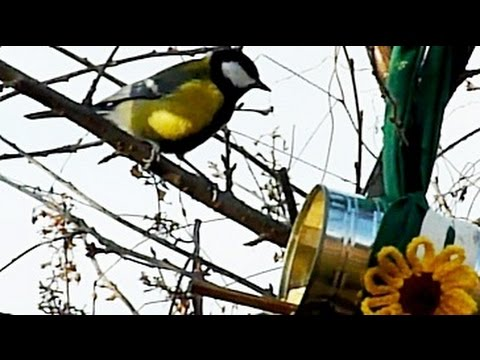 Howl Of A Dog - Rescued Dogs Help Us Make Bird Feeders From Tin Cans. Upcycling With Fun