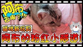 【Bonnie】阿布在哪裡?! - 貓咪的新玩具│阿布的超治癒粉紅隧道 ! !