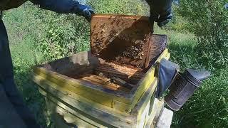 Пчелы без Соплей пчеловода знают как сформировать гнездо к Зиме.