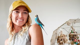 BASIC BUDGIE AND PARAKEET CARE 101 | General Care For Budgies and Parakeets
