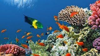 Царство кораллов ⁄ Coral Kingdoms Подводный мир