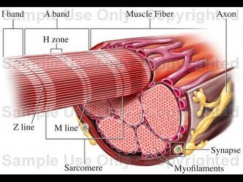 Ból w kościach i mięśniach nóg