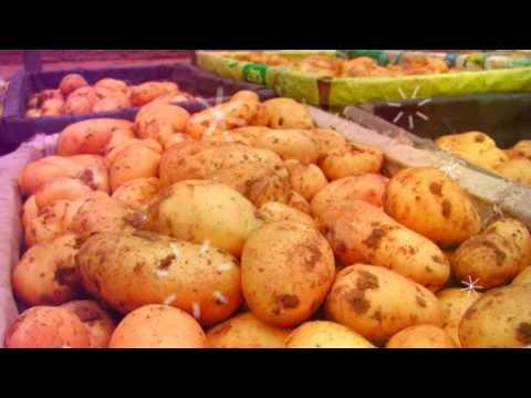 ПОЛЬЗА КАРТОФЕЛЯ | сырой картофель польза и вред, можно ли есть сырой картофель?