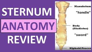 Sternum Anatomy | Manubrium, Gladiolus, Xiphoid Process