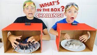 WHAT'S IN THE BOX CHALLENGE ! - C'est quoi dans la boite ? - Néo VS Swan