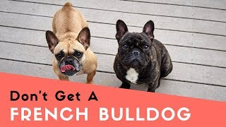 10 Things I Wish I Knew Before Getting A French Bulldog (A Generalized List)