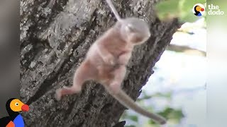 Download Youtube: Crying Baby Squirrel Stuck on Thorn Rescued by Incredible People | The Dodo