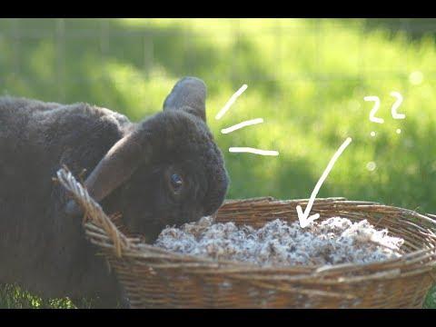 Einstreu für Kaninchen- Vergleich und Test