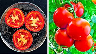 19 EASY WAYS TO GROW YOUR OWN SEEDS AND PLANTS
