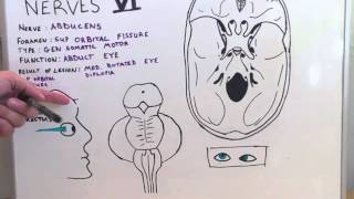Cranial Nerve VI - Anatomy Lecture for Medical Students - USMLE Step 1