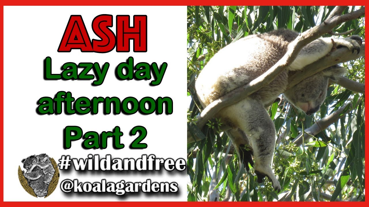 Lazy day afternoon with ASH – part 2