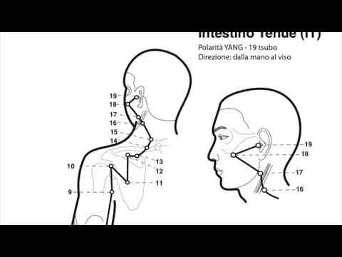 Olisticmap - I 12 meridiani della Medicina Tradizionale Cinese