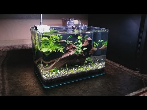 3 gallon nano setup